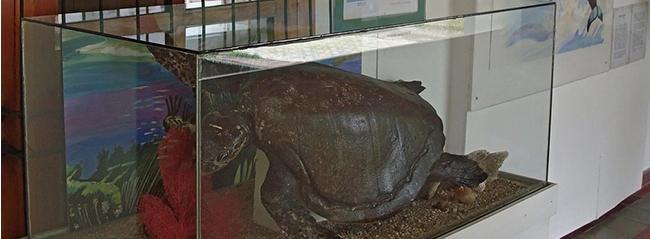 museo de historia natural, el salvador