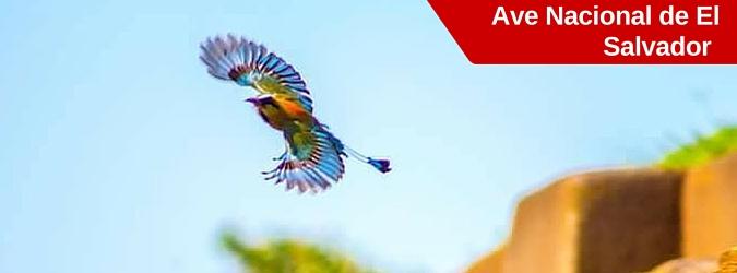 torogoz, ave nacional de el salvador, talapo