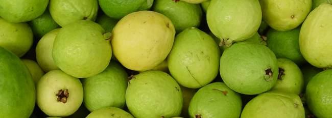 las guayabas, fruta de el salvador