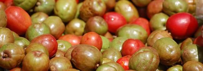 los jocotes, fruta tipica de El Salvador
