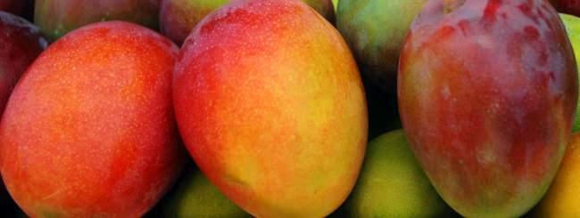 los mangos verdes y maduros, fruta típica de el salvador