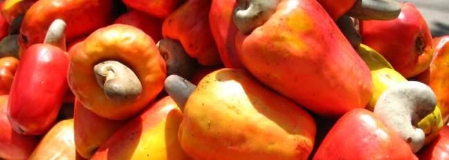 los marañones, fruta de el salvador
