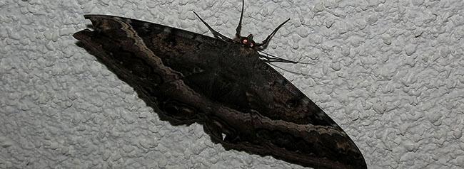 ver una mariposa negra, mito de el salvador